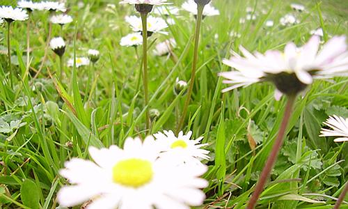 campo fiorito primavera