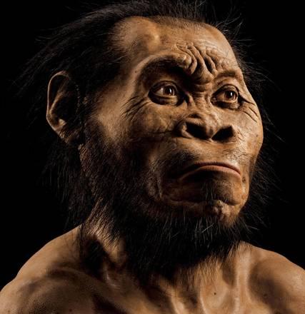 La ricostruzione dell'Homo Naledi