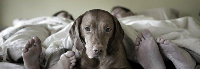 Sesso con cane a palermo