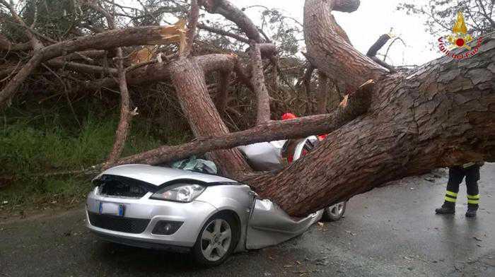 Ardea (Roma), auto schiacciata da grosso albero: due morti