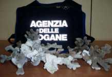 Reggio Calabria, sequestrati coralli Scleractinia in via estinzione