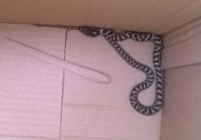 Un serpente in giro per Cosenza. Catturato e liberato lontano
