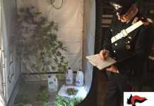 Piantine di cannabis in casa, un arresto a Cosenza
