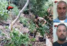 100 piante di canapa indiana a Oppido Mamertina. Arrestati padre e figlio