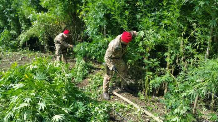 Campo di calcio trasformato in piantagione di marijuana, 2 arresti