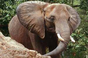 Ferdinando Mocciola morto in safari in Kenia. Urtato da elefante