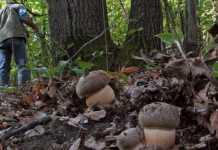 Disperso a Celico, cercatore di funghi viene ritrovato in Sila