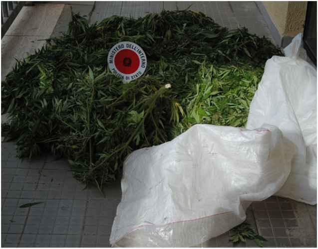 La marijuana sequestrata dalla Polizia a Crotone