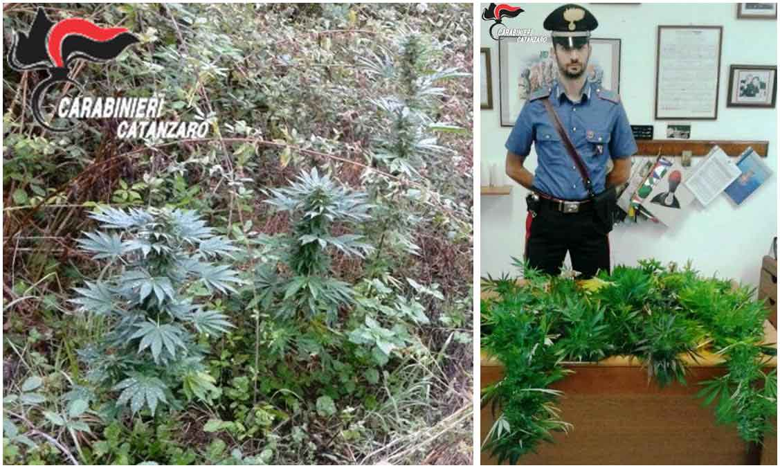 La piantagione di marjuana scoperta dai carabinieri a Conflenti