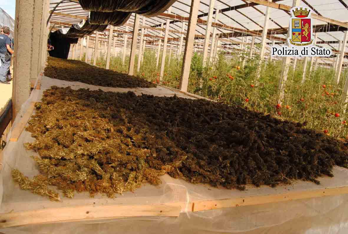 Gela, scoperta serra con marijuana per valore di 450mila euro. Arresti