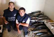 tonno-rosso-guardia-costiera