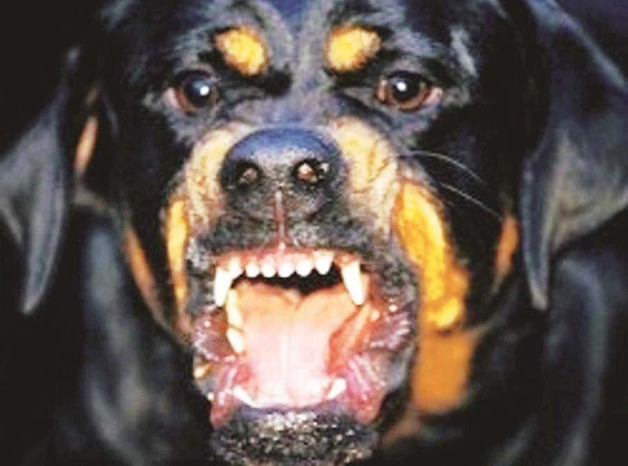 Paura ad Acri: Rottweiler azzanna un ragazzo