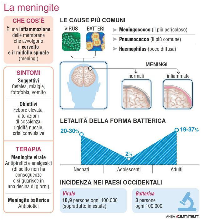 Nell'infografica realizzata da Centimetri la scheda della meningite