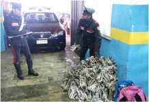 Rubano 600 chili di rame, arrestati 4 nordafricani