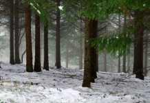 Maltempo in Calabria: giorni di pioggia e vento. Neve su rilievi