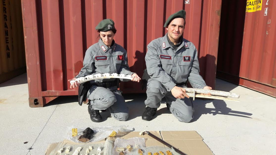 Personale del carabinieri forestali con l'avorio sequestrato in porto