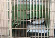 Costretti a vivere in celle per detenuti, scioperano agenti di Arghillà