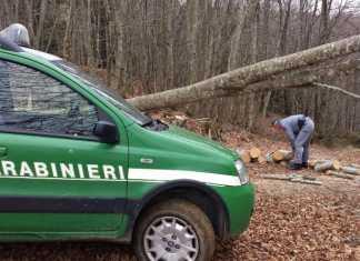 Taglia e trafuga legna da Parco delle Serre, arrestato