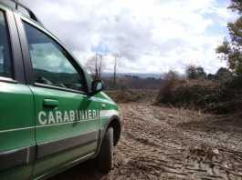 Taglio abusivo di alberi, 4 denunce nel Vibonese