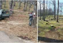 Sequestro Rossano alberi tagliati