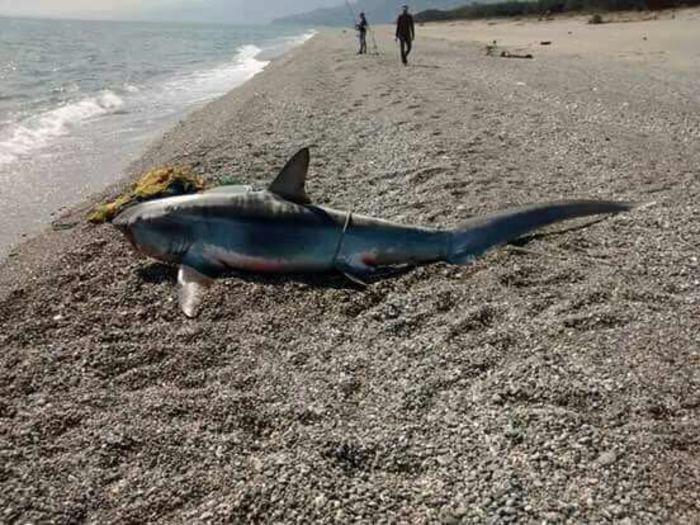 squalo catanzaro