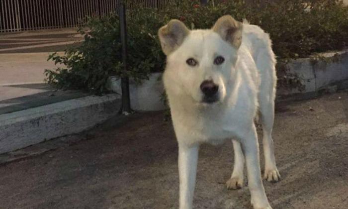 Cane ucciso e foto sui social, condannati a 16 mesi: pena sospesa