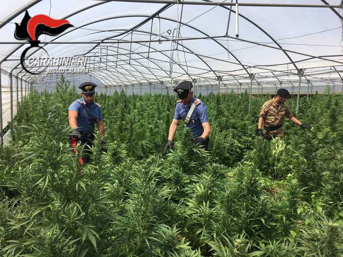 Droga: carabinieri Gioia Tauro individuano piantagione