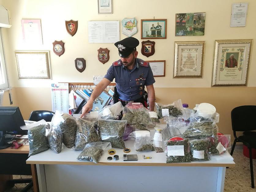 Cir con una serra di marijuana in casa arrestati padre - Piano casa calabria 2017 ...