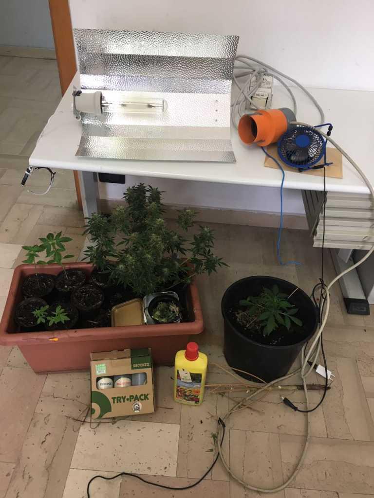 laboratorio droga rossano