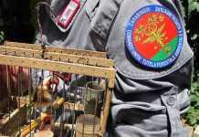 Tre denunciati nel reggino per attività venatoria illegale