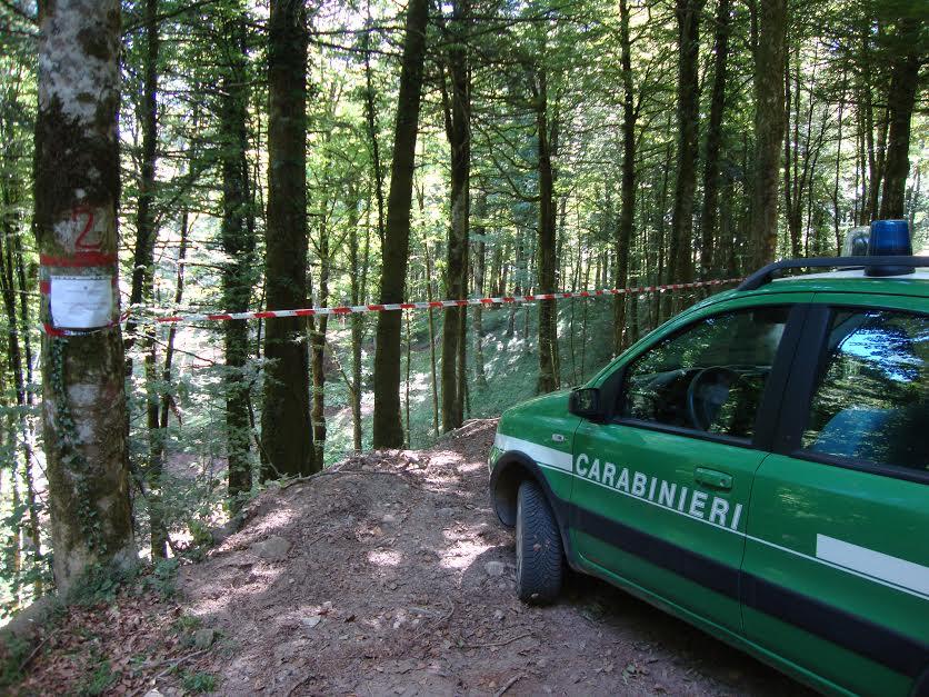 carabinieri forestali vibo