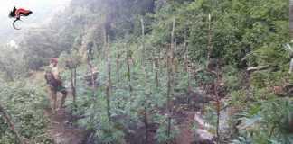 piantagione marijuana Caulonia_SPN