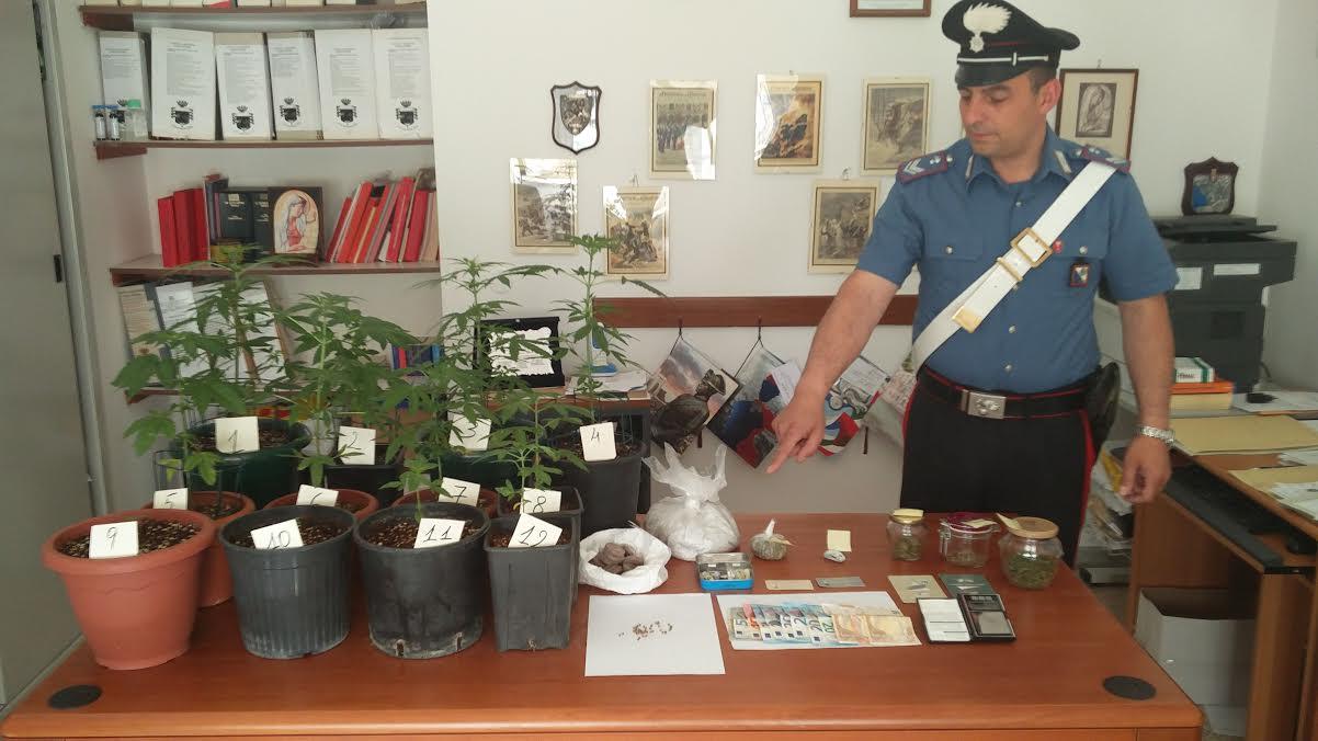 piantine di marijuana Santa Sofia d'Epiro