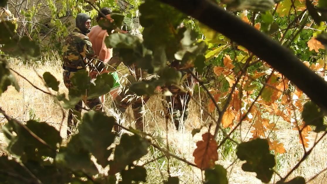 Arresto piantagione marijuana rende rose 1 secondo - Piano casa calabria 2017 ...