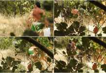 La sequenza fotografica dei carabinieri di Rende