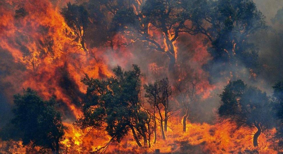 Incendi a Rende e Cosenza, roghi a Quattromiglia e Donnici - Secondo Piano News