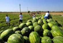 Schiavi nei campi nel Salento, condannati i 13 imputati