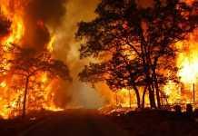 Incendio boschivo vigili del fuoco