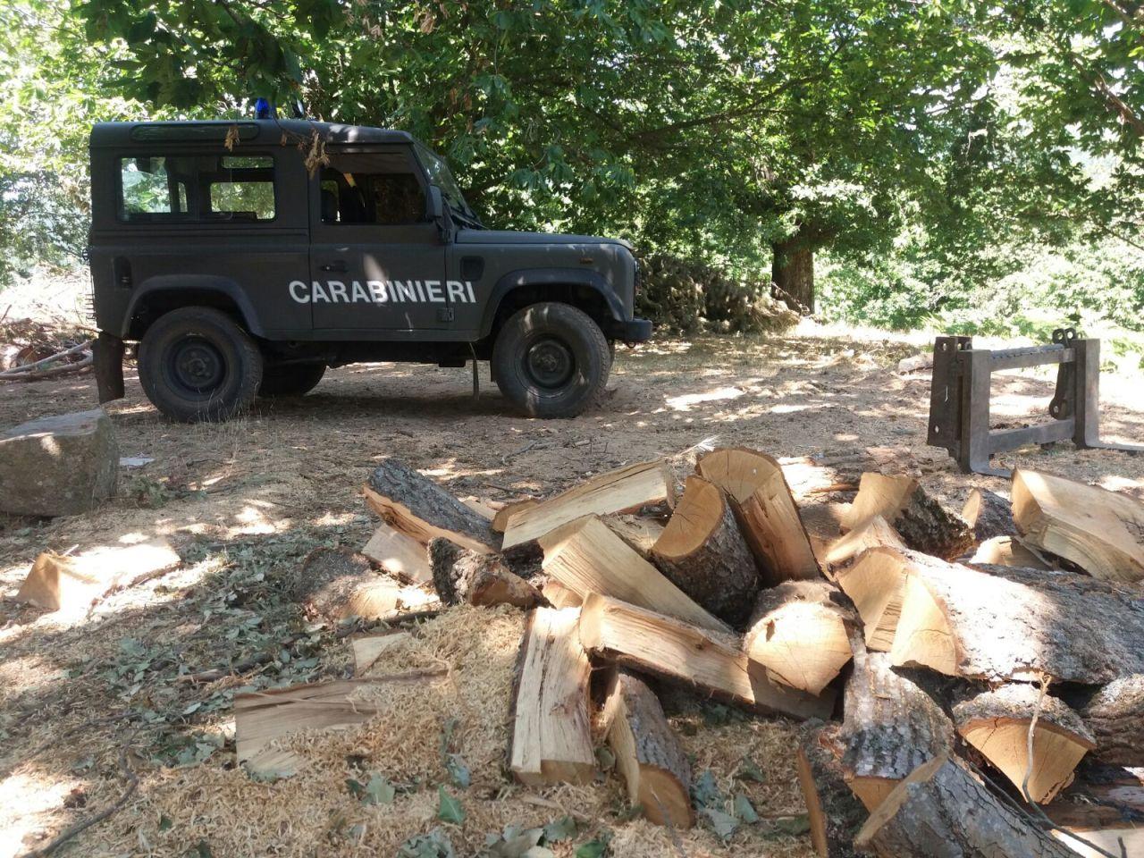 Furti di legna