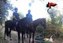 carabinieri cavallo sant eufemia aspromonte