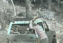 Furto di legna, due misure cautelari a Rossano
