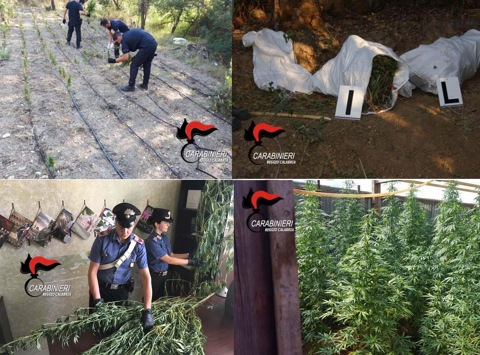 piantagioni marijuana