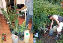 piantine marijuana Sciammarella Paola
