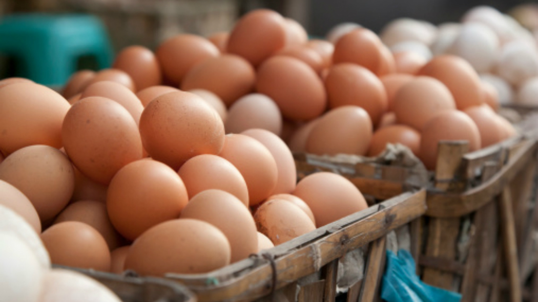 uova fipronil rischio contaminazione