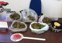 Marijuana Reggio