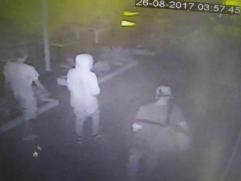 Una immagine video con il branco a Rimini