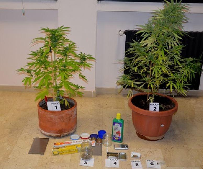 Coltivavano marijuana in casa arrestati due fratelli - Piano casa calabria 2017 ...