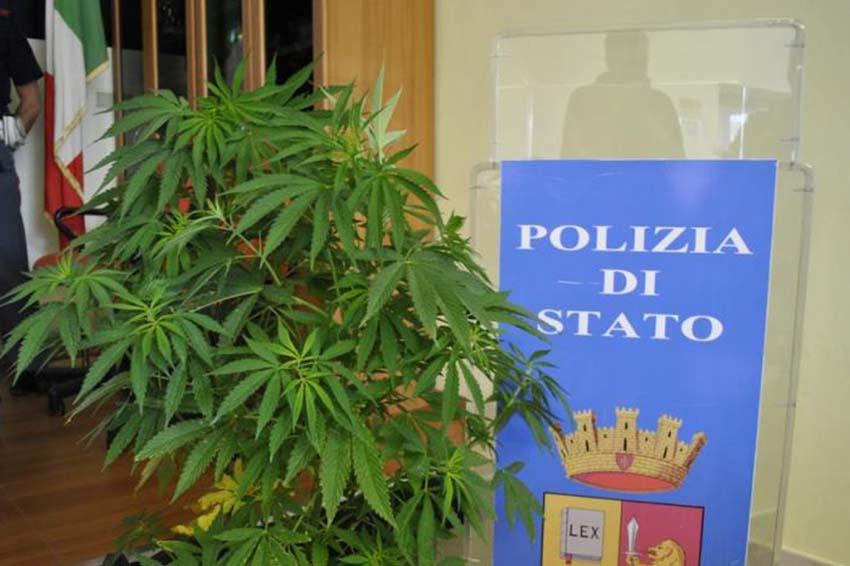 Con una pianta di marijuana in casa denunciato un giovane - Piano casa calabria 2017 ...