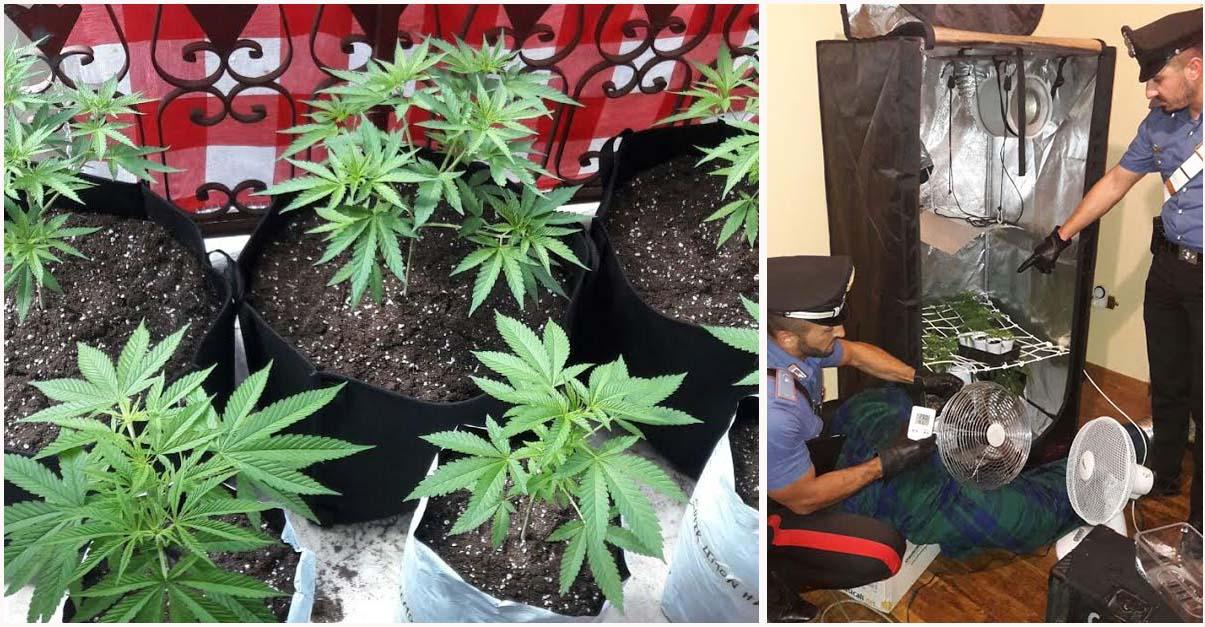 serra marijuana Acri