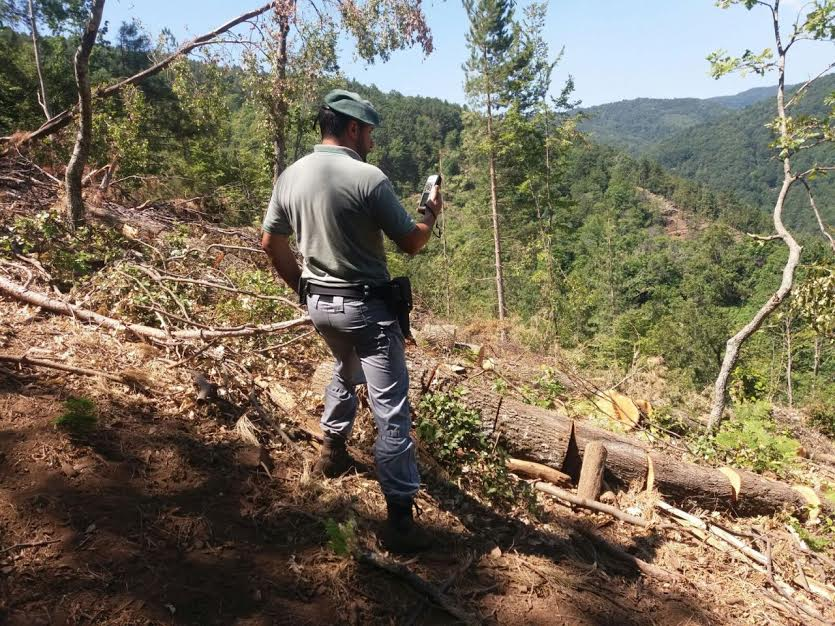 taglio alberi mesoraca cc forestali